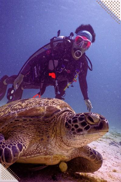 Max diving