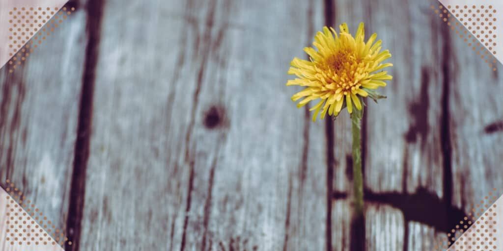 How to achieve personal growth flower